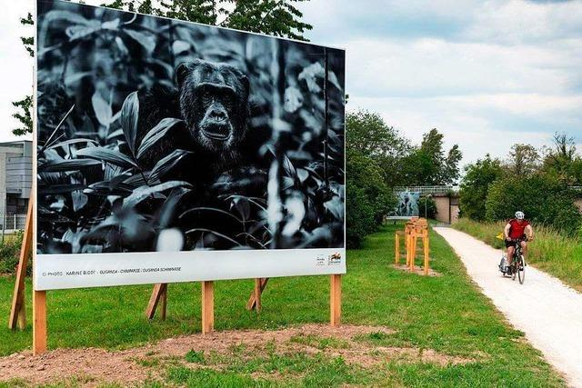 Eine 14 Kilometer lange Open-Air-Galerie zieht sich den Canal du Huningue entlang
