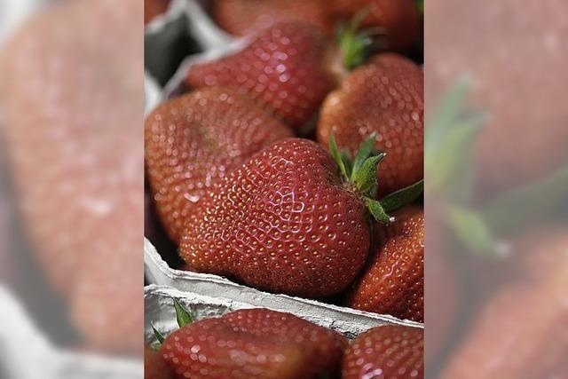 Die Erdbeeren kosten mehr als im Vorjahr