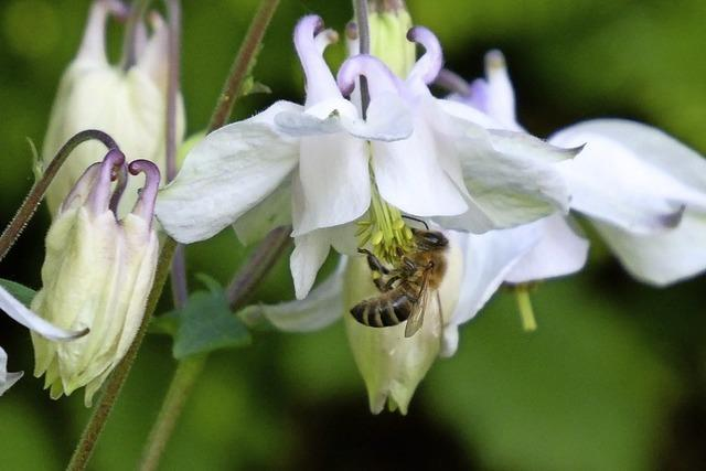 Bienentisch ist gedeckt