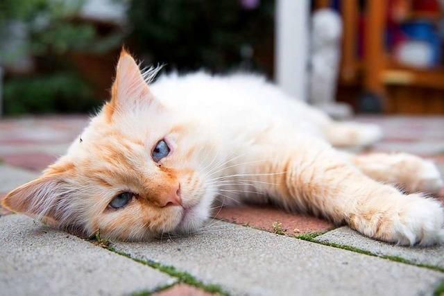 Herrenlose Katzen haben ein schweres Los – auch in Südbaden