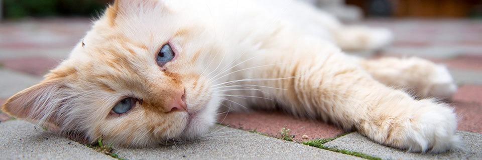 Herrenlose Katzen haben ein schweres Los - auch in Südbaden