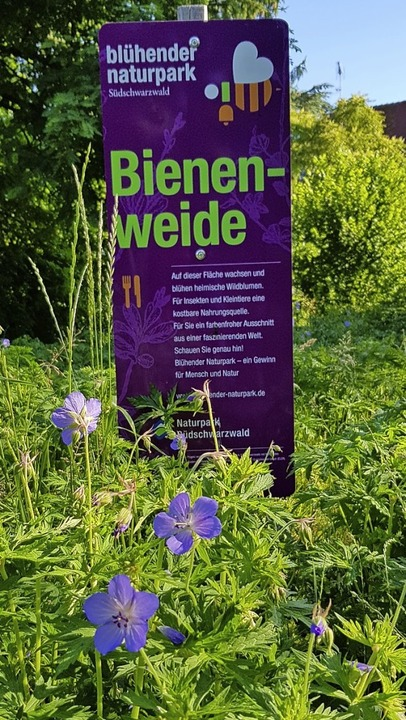 Heimische Blütenpflanzen ersetzen den  frühere englischen Rasen.  | Foto: Gerhard Walser