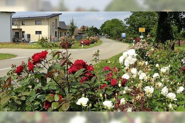 Blütenpracht am Ortseingang