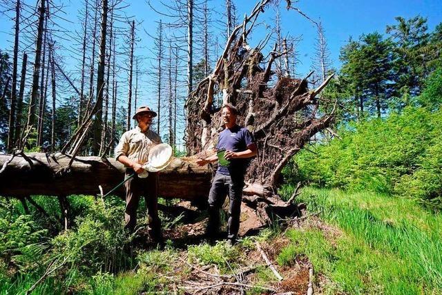 Forscher weisen mehr als 2100 Tierarten im Nationalpark Schwarzwald nach