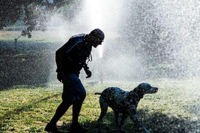 Mensch und Haustier leiden nicht nur gemeinsam, sondern teilen auch die Freuden einer Abkühlung