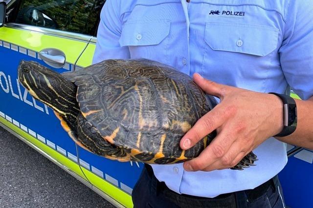 Polizei nimmt große Schildkröte in Gewahrsam