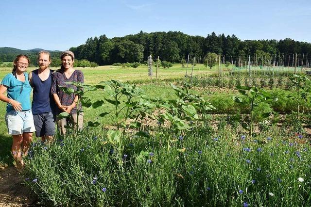 Eine Gundelfinger Firma kultiviert alte und neue Gemüse- und Blumenraritäten für die Saatgutgewinnung