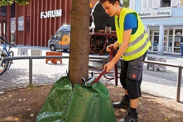 Denzlingen stellt Wasserspender für Bäume auf