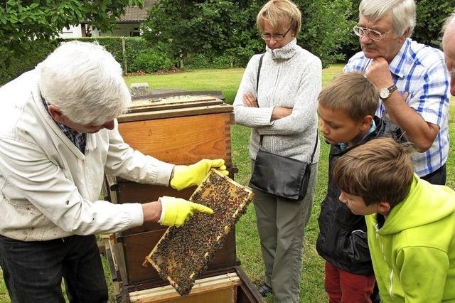 Von Bienen und Wildbienen