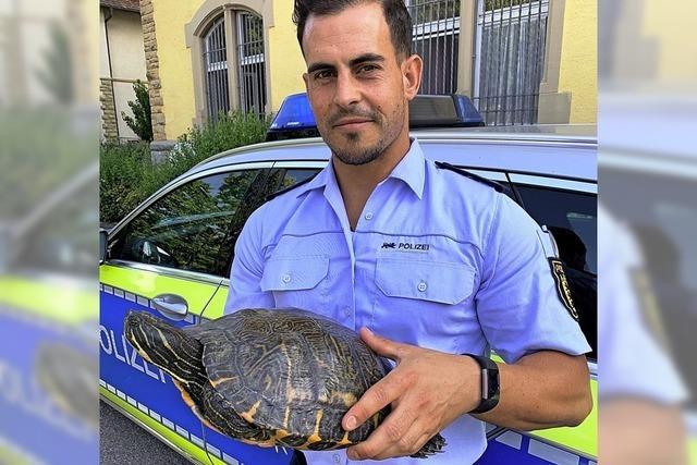 Riesenschildkröte doch etwas kleiner