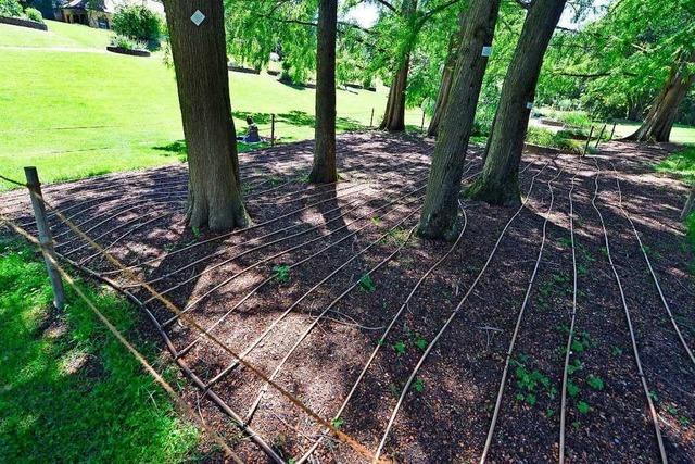 Der Botanische Garten erhält eine Tropfschlauchbewässerung