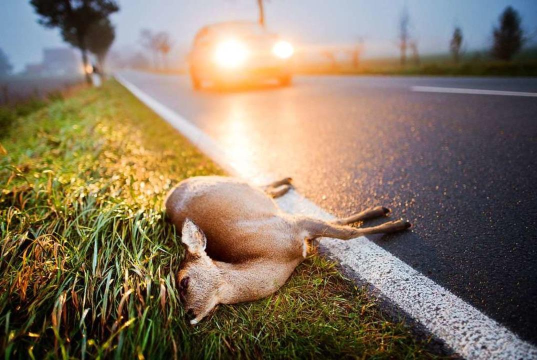 Das Reh (Symbolfoto) hat nach Angaben der Polizei noch gelebt.  | Foto: Julian Stratenschulte (dpa)
