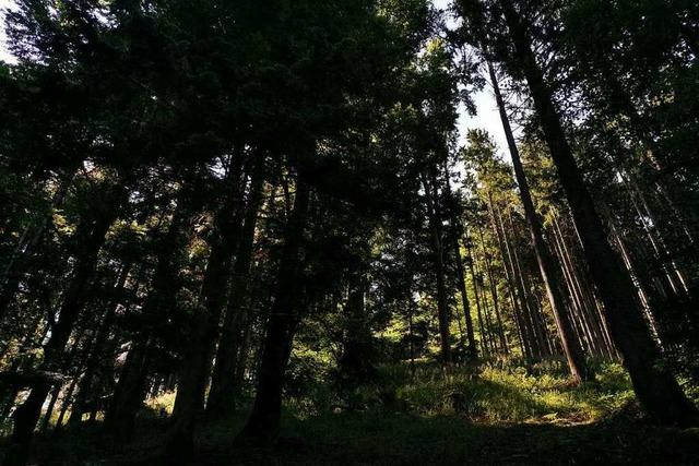 Emmendinger Kreisbrandmeister warnt vor Waldbrandgefahr