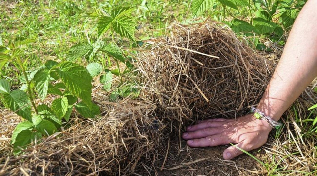 Feucht und voller Leben ist es zur Freude des Bauers unter der Grassillage.  | Foto: Gabriele Hennicke
