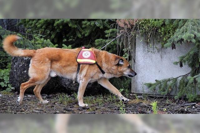 Der lange Weg zum Rettungshund