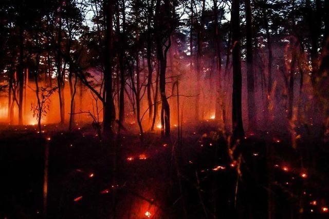 Waldbrandgefahr in Baden-Württemberg am Sonntag hoch bis sehr hoch