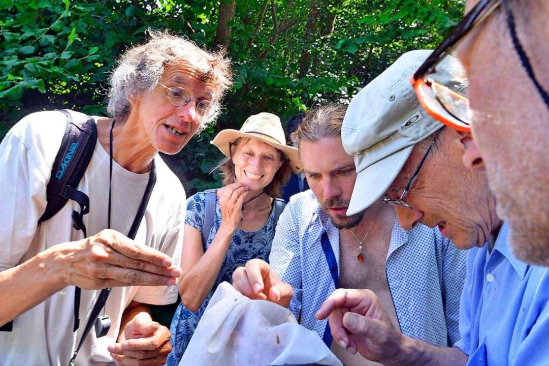 Die Experten Klaus Rennwald (links) un...die Suche nach diversen Krabbeltieren.  | Foto: Michael Bamberger