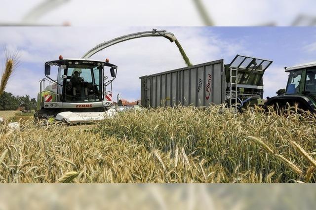Bauern erwarten gute Erträge