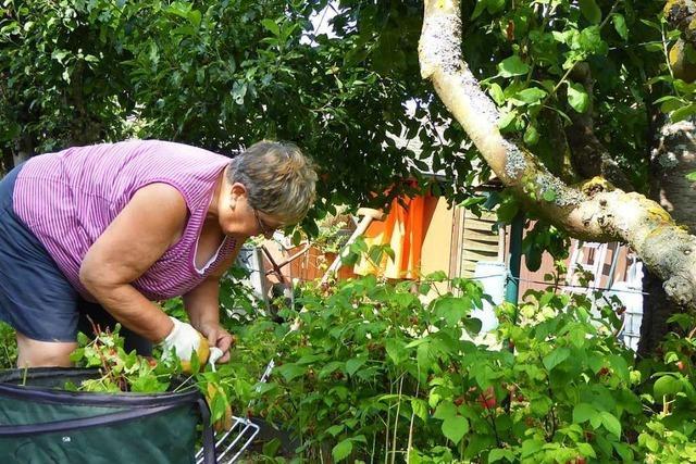 Gartenfreunde Lörrach: Lerchengrund soll Teil einer Quartiersarbeit werden