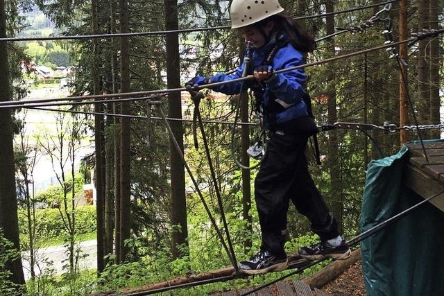 Erdmännchen im Schwarzwald unterwegs