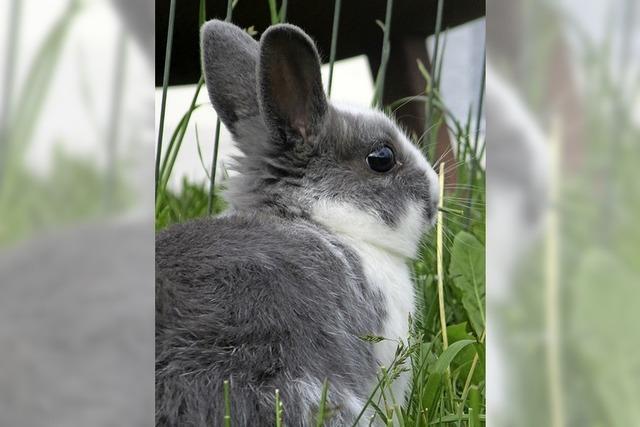 Kaninchen sind süß, aber machen Arbeit