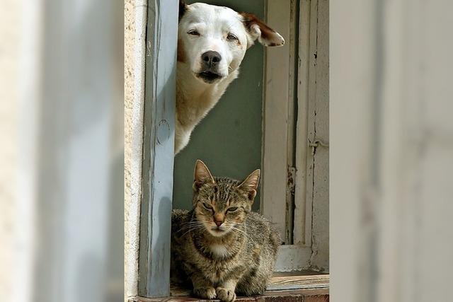 Tierärtin Kerstin Stubbe hält Vortrag über Altersbeschwerden bei Hund und Katze