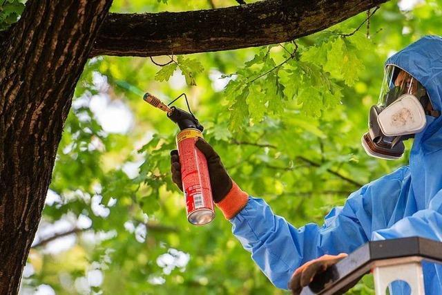 In Lörrach werden im Notfall noch Pestizide eingesetzt