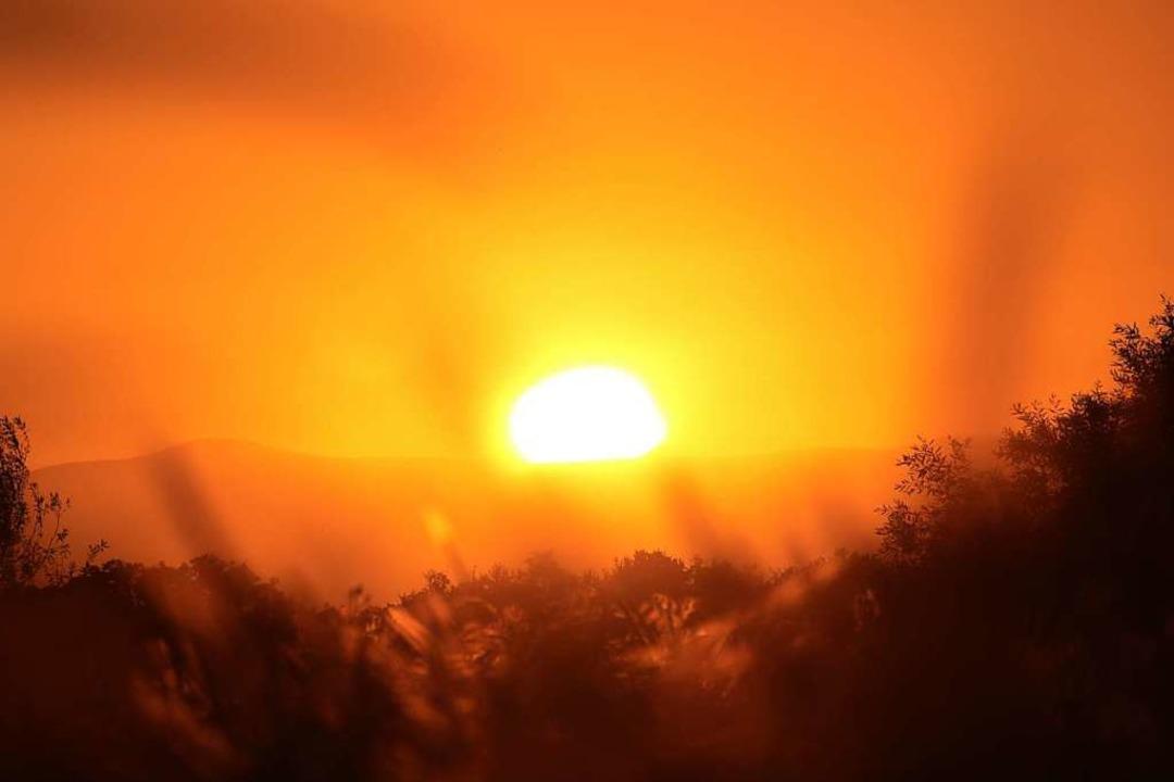 Inwieweit auch die jüngste Hitzewelle ...angekommen ist, wird immer deutlicher.  | Foto: Harald Höfler