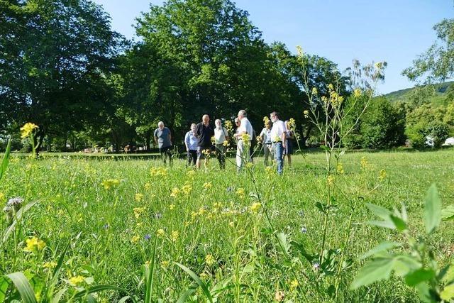 In Weil am Rhein wird sogar der Friedhof zur Bienenwiese