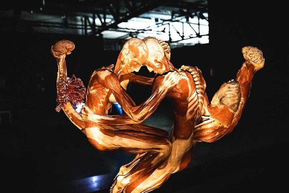 Ohne Andrang konnten Besucher die rund 200 Präparate der Körperwelten-Ausstellung im Taschenlampenschein begutachten. (Foto: Janos Ruf)