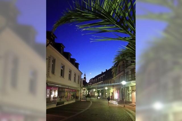 Palmen in der Stadt