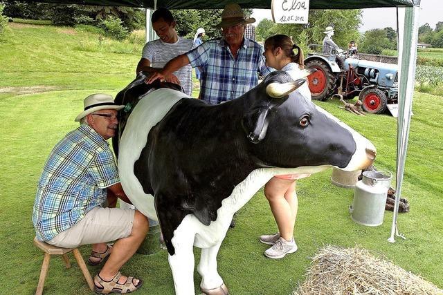 Golfspielen mit Kuh