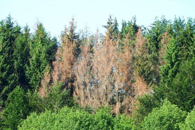 Hotzenwälder Waldbesitzer fürchten Wegfall der Förderung