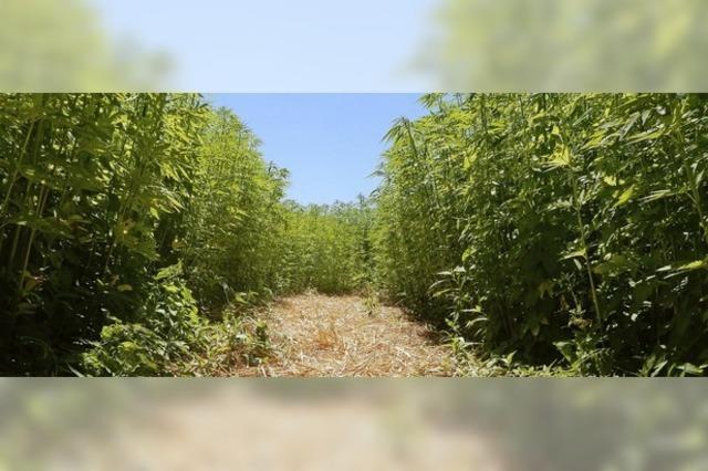 Das Hanflabyrinth in Opfingen sensibilisiert für Nachhaltigkeit