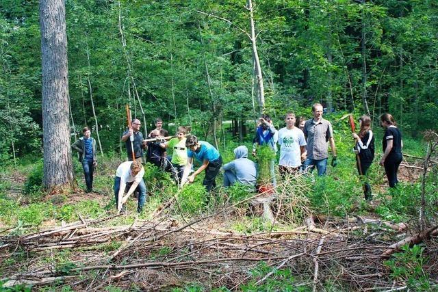 Wehrer Schüler setzen sich für den Forst ein