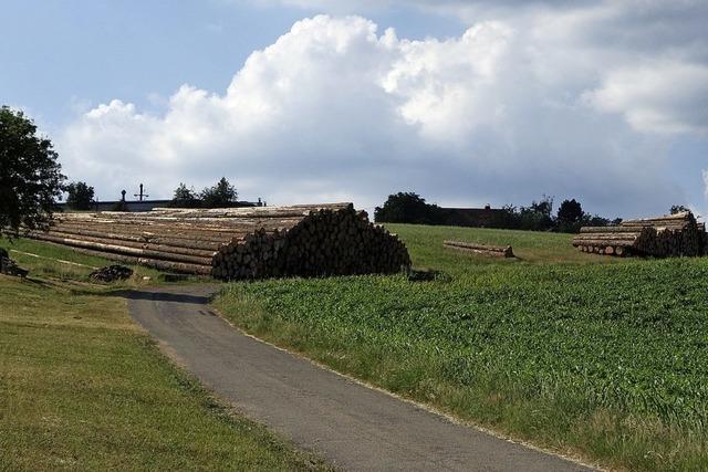 Lagerfläche für befallene Bäume