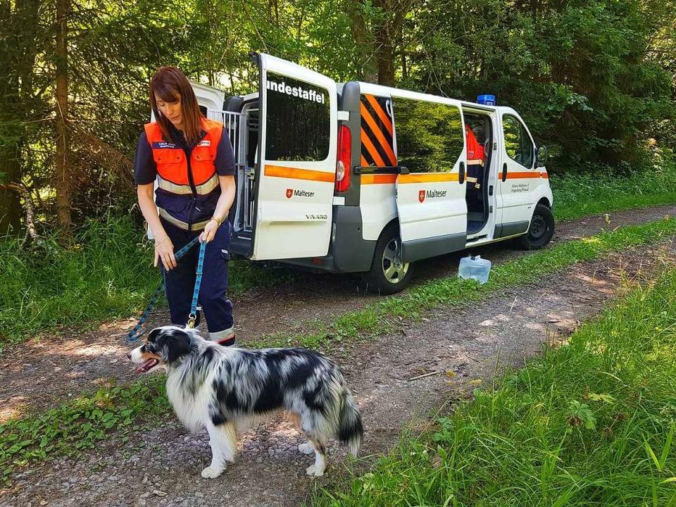 Auch Suchhunde sind im Einsatz.  | Foto: kamera24.tv