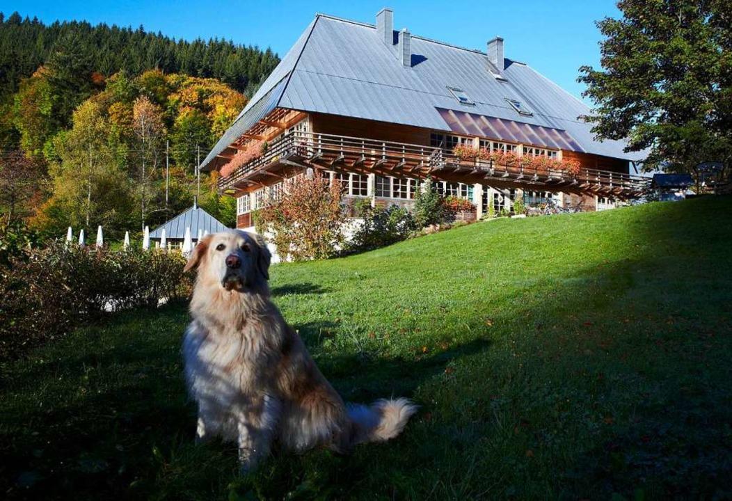 Bibergeschädigt: das Gasthaus Sommerau.  | Foto: privat