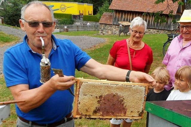 In Wagensteig gibt es Bienen, die sich streicheln lassen
