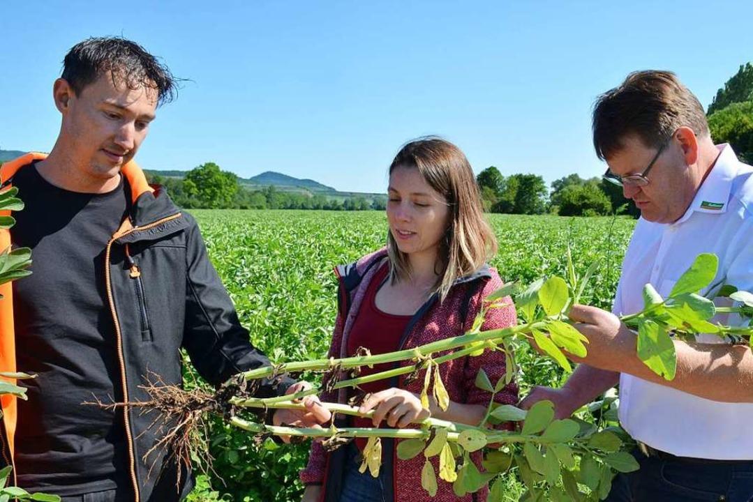 Die Landwirte Jürgen Hintereck und The...drich Müller (von links) eine Pflanze.  | Foto: Gabriele Hennicke