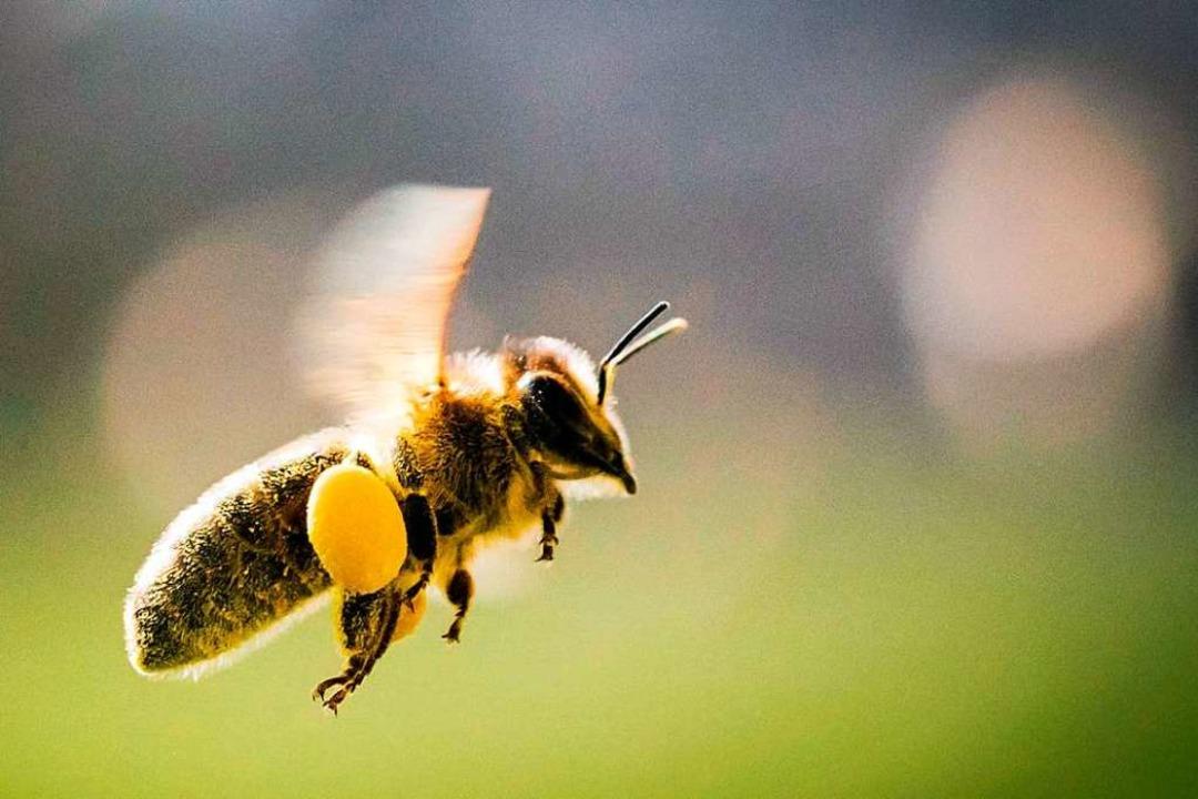Der Merdinger Landwirt setzt sich für die Bienen ein.  | Foto: Frank Rumpenhorst