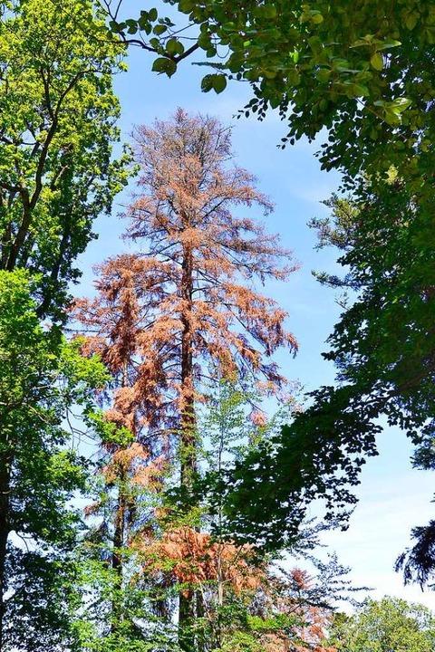 Das Forstamt  will den Stadtwald für die Zukunft rüsten.  | Foto: Michael Bamberger