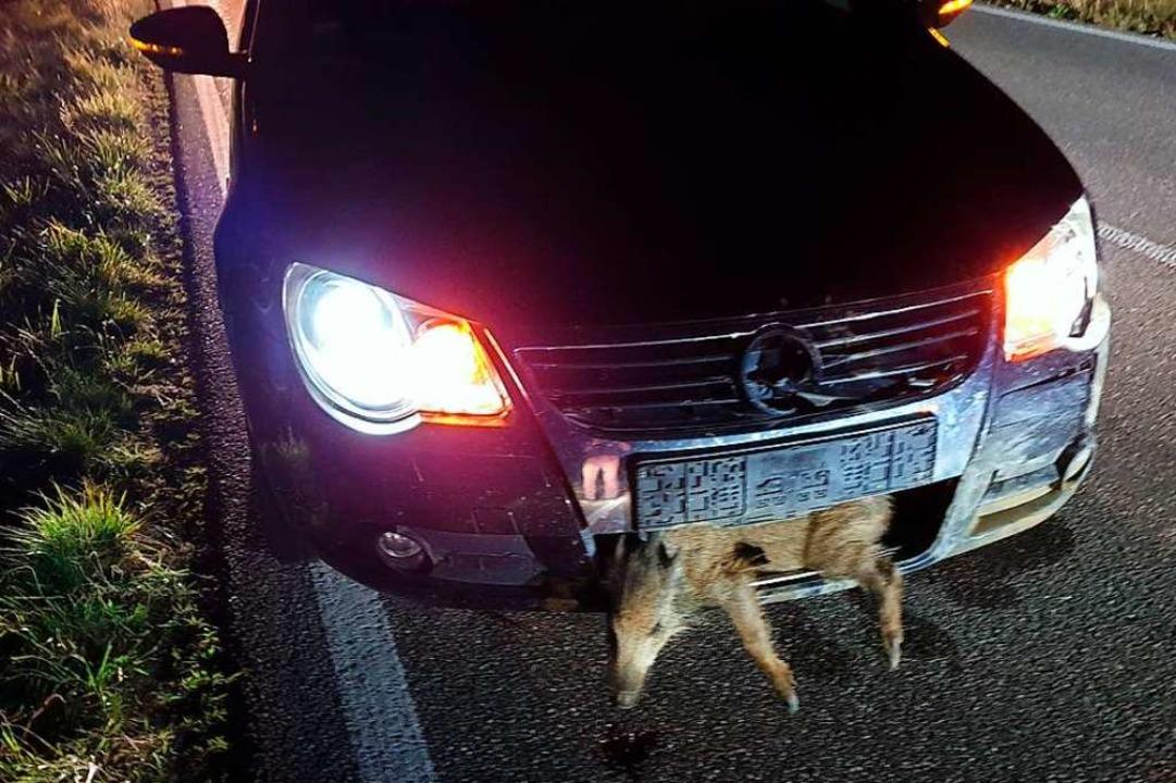 Eines der Tiere aus der Wildschweinrot...Wagen eingeklemmt, lief aber dann weg.  | Foto: privat