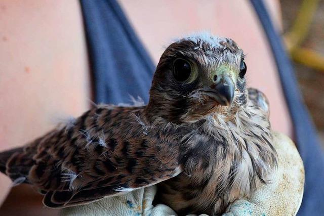 Viele wollen Wildtieren helfen – und begehen tödliche Fehler