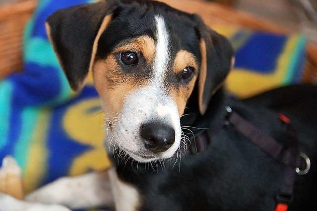 Gemeinderat bremst Stadt Schönau bei der Erhöhung der Hundesteuer