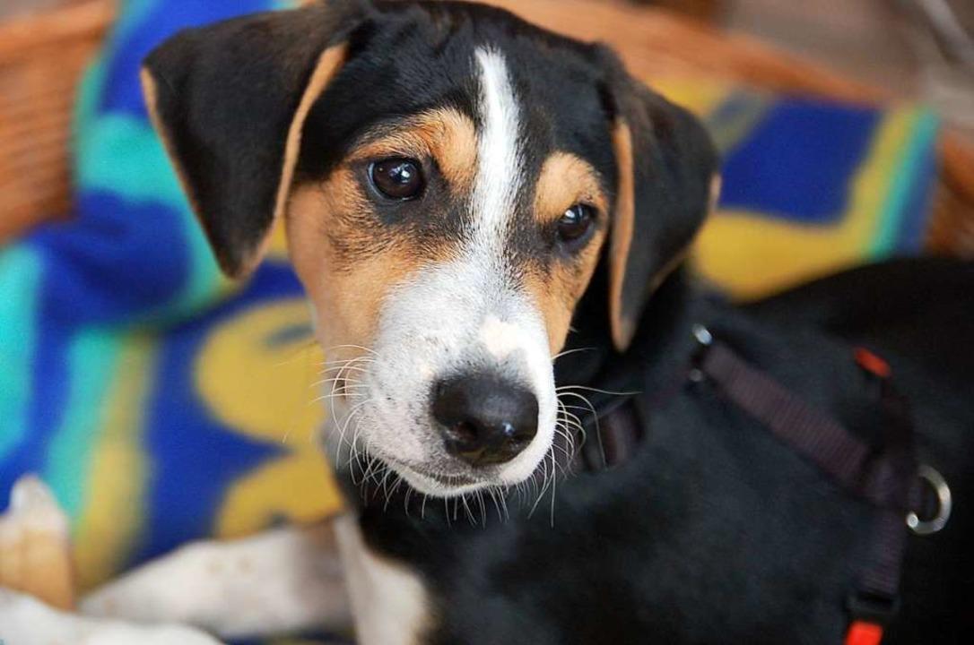 Auch der brave Henry trägt eine Steuer...Jahr, bei einem zweiten Hund 180 Euro.  | Foto: Angelika Schmidt
