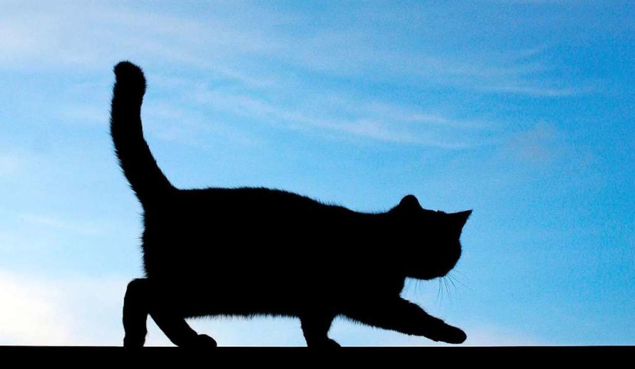 Die Polizei sucht den Halter der Katze (Symbolbild).  | Foto: Patrick Pleul
