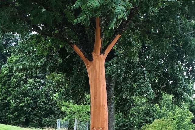 Unbekannte entrinden Baum in Britzingen