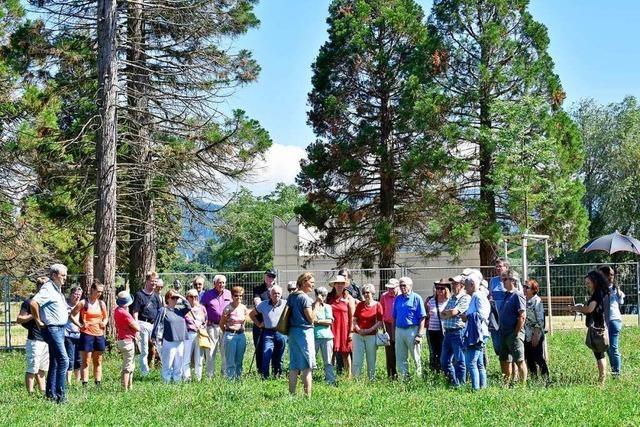 Wie der Klimawandel sich auf die Bäume am Freiburger Seepark auswirkt