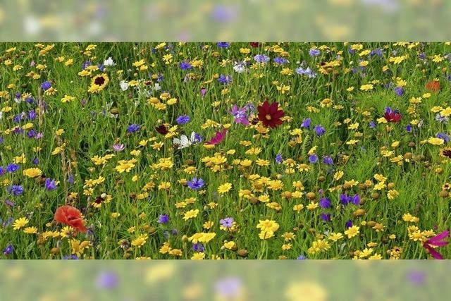 Blumen statt Schotterwüste